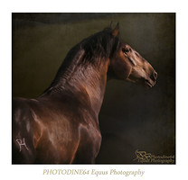 EQUUS GRAPHIC